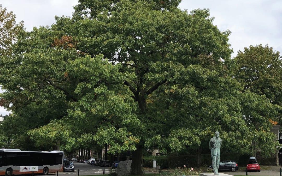 Propositions pour le quartier Observatoire – Vert Chasseur
